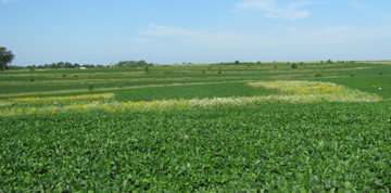 Neal_smith_soybeans