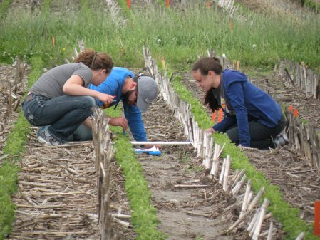 Megan Koppenhafer, Ben Schrag, and Jessica Rehmann searching the soil for evidence of earthworms at research plots west of Ames.