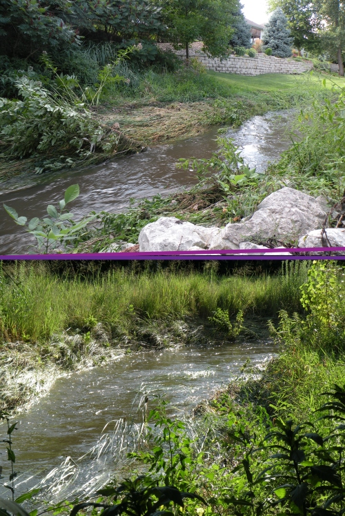 The riparian buffer appears to be doing its job well!  While the force of the moving water has laid down many of the grasses along the stream's edge, this dense vegetation is providing ground cover and protection from erosion along the stream banks.
