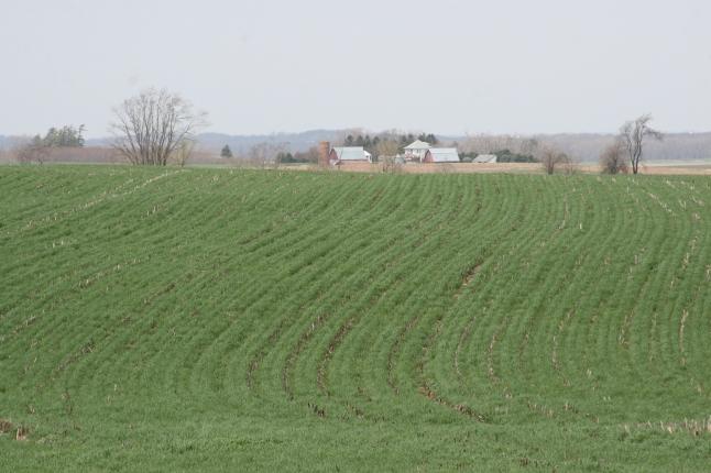 Cover_crop_April_Berger_Farm