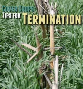 CC-TipsForTermination