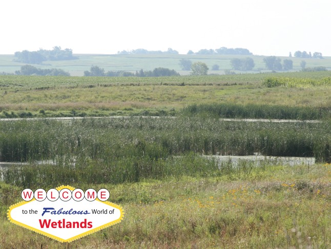 welcome to wetlands