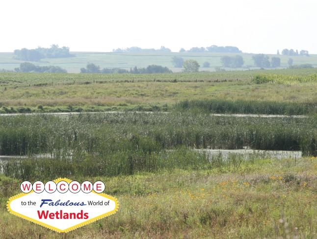 welcome to wetlands