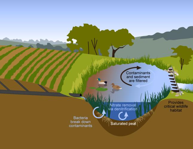 wetland_illustration_UPDATED_06_2013