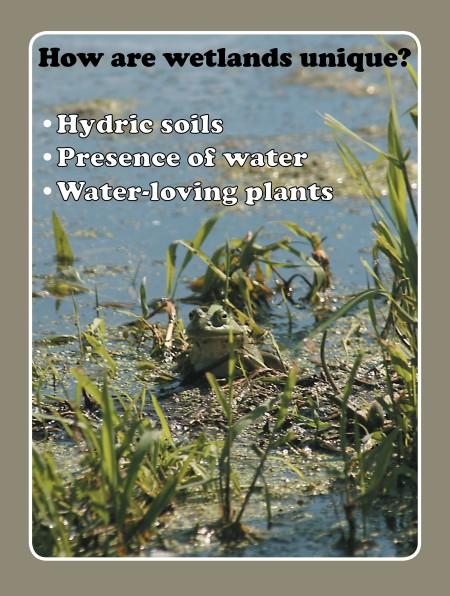 wetlands are unique