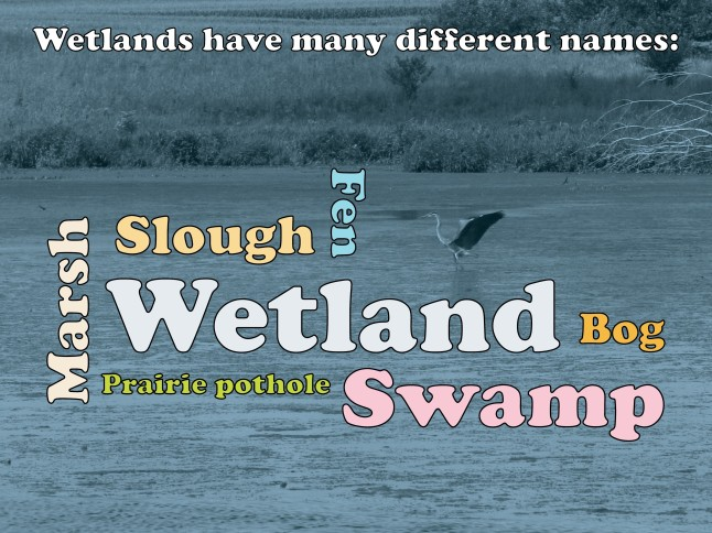 wetlands wordcloud