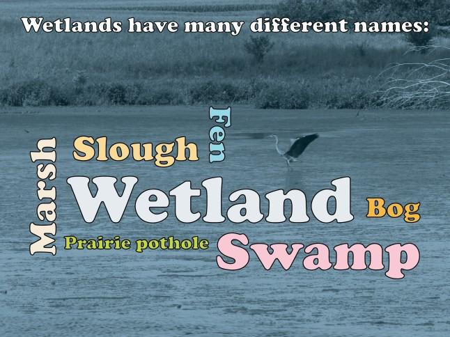 wetlands wordcloud