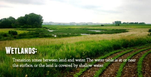 WetlandsDefn