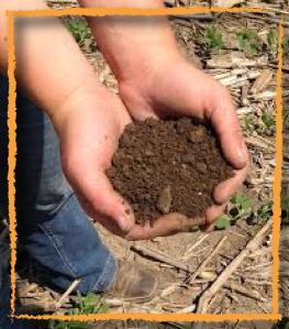 HC-Soil