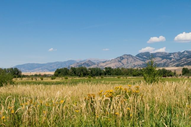 Site 1 Wetlands with Bridger Mountains in Background