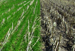 cover_crops_and_without