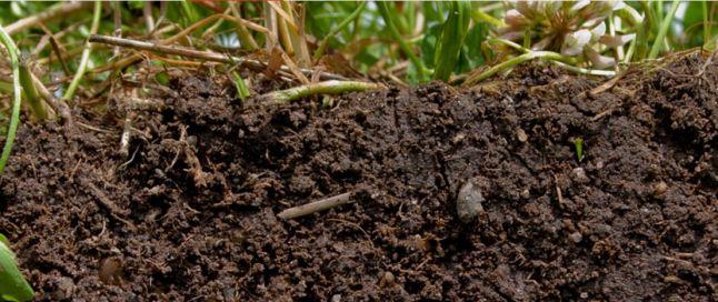 Soil1
