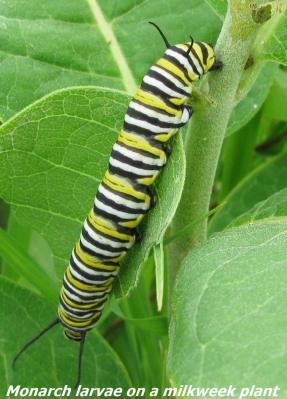 larvae3_label