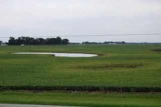 A roadside view of a prairie pothole.