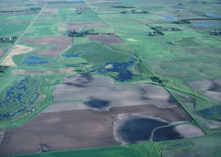 An aerial view of prairie potholes in Iowa.
