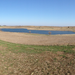 A CREP wetland in early spring in Iowa.