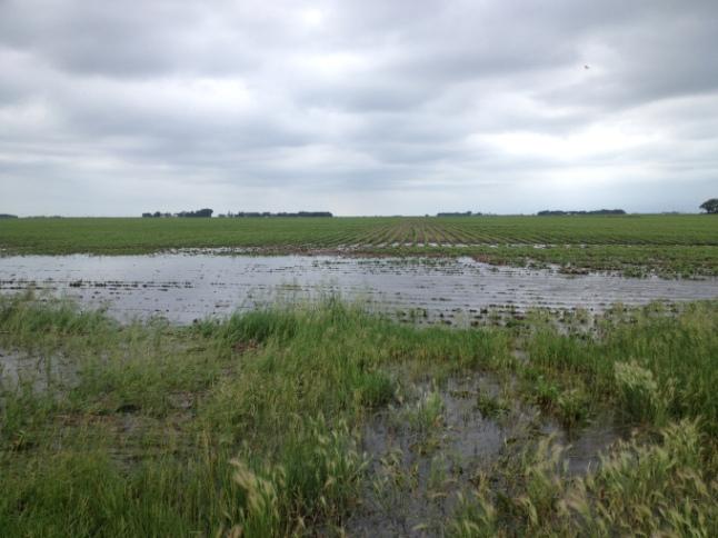 underperforming cropland