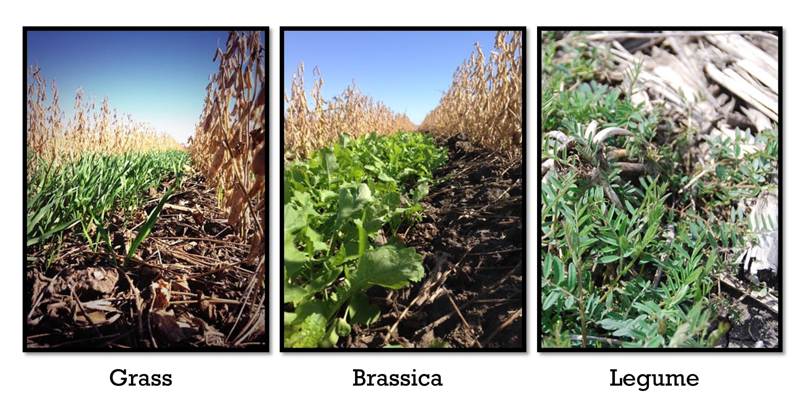 cover-crop-species1-e1523647673791.jpg