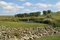 wetland field day