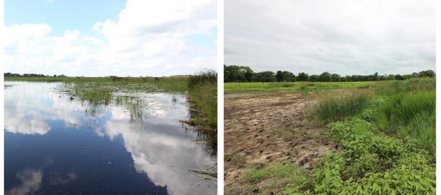 Wetland compare-01
